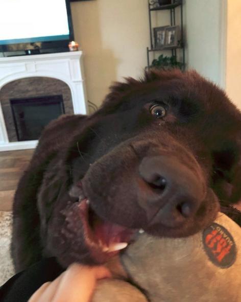 How to Calm Down a Hyper newfoundland dog?